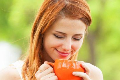 ¿Conoces todas las propiedades del té boldo?