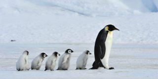 Humor: el chiste de pingüinos de este jueves 22 de agosto de 2019