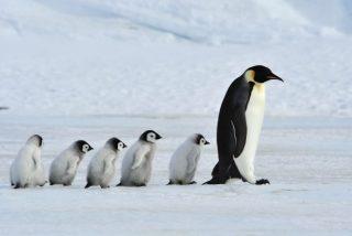 Chiste: el del lechero y el camión de pingüinos