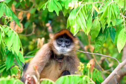 Dos excelentes opciones para visitar Nicaragua desde Costa Rica