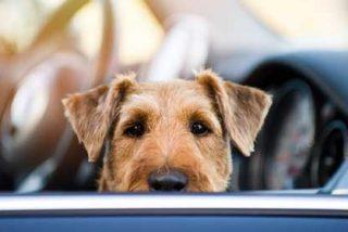 Nunca dejes a tu perro encerrado en el coche