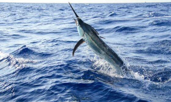 pez espada a la plancha