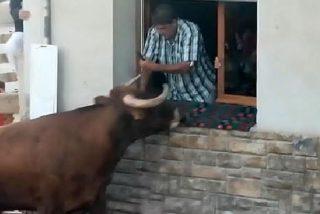 Un toro saltarín se intenta colar por la ventana de una casa durante un encierro en Navarra