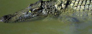 """Duelo a muerte de reptiles entre un caimán y una anaconda por una cuestión de """"lindes"""""""