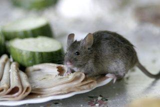 Un ratón se arroja de cabeza a la freidora hirviendo de un restaurante de comida rápida