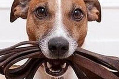 Australia multará a los dueños si no pasean a su perro una vez al día según su nueva ley de bienestar animal