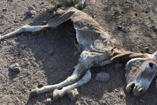 La Policía busca a los autores de la matanza a balazos de burros en California