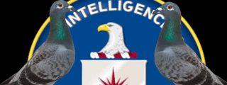 Así usó la CIA palomas mensajeras durante la Guerra Fría para operaciones de espionaje contra la Unión Soviética