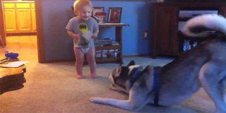 Mascotas: charlas de bebés y perros
