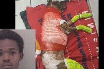 Condenan a 5 años de prisión a este joven que quemó vivo a su perro y acabó matándolo