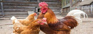 """La 'leche' que le suelta esta paisana al conductor que la increpa gritando que """"los gallos violan a las gallinas"""""""
