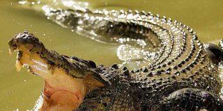 Una heroína de 11 años le arranca los ojos a un cocodrilo para salvar a su amiga pequeña