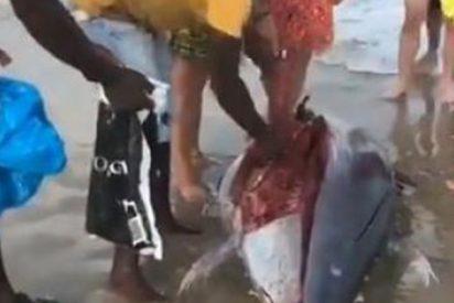 Encuentran a este atún varado en La Manga y en vez de salvarlo, lo cortan en filetes para comérselo