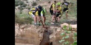 Estos ciclistas españoles rescatan a un ciervo de morir ahogado
