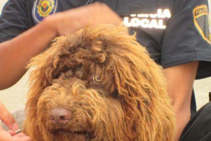El inesperado final de Suso, el perro policía, tras la trágica muerte de su agente guía
