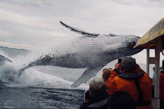 Vídeo Viral: el aterrador salto de la ballena