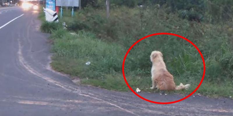La emocionante historia del perro BonBon: se reencuentra con sus dueños tras esperar durante 4 años donde se perdió