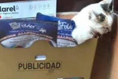 Muere este gatito al que habían maltratado y abandonado en un buzón de Huesca