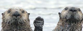 Para reírse un rato: Las 40 fotos más divertidas de la naturaleza salvaje