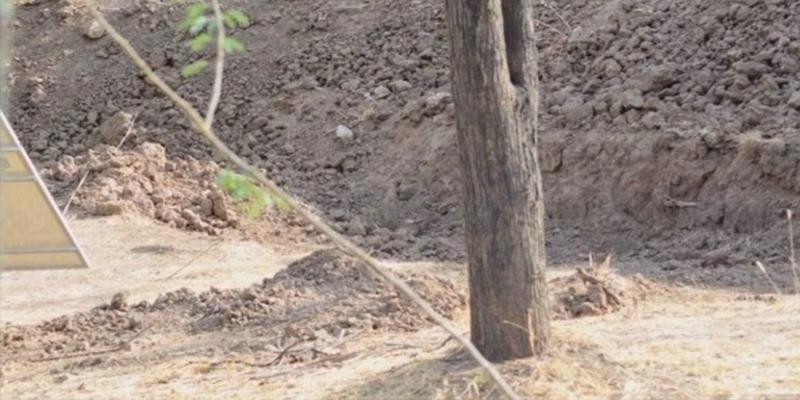 'Reto viral': ¿Eres capaz de encontrar el leopardo camuflado en esta foto?