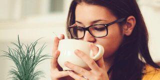 ¿Conoces todas las propiedades del té de citronela?
