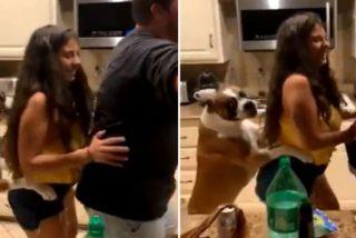 Un perrete cachondo se suma al baile del 'trenecito' junto con sus dueños
