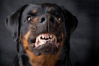 Muere un hombre de 47 años atacado en su casa por su propio perro Rottweiler