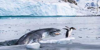 El instinto de la chita, la ferocidad del hipopótamo, el hambre de la foca, la agonía de la tortuga...