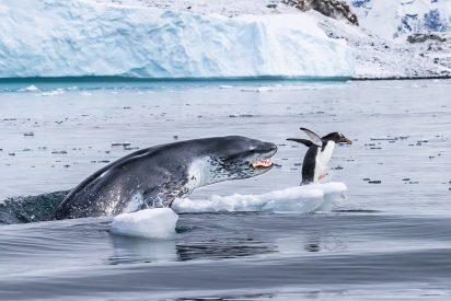 El instinto de la chita, la ferocidad del hipopótamo, el hambre de la foca, la agonía de la tortuga: las mejores fotos de vida silvestre en 2019