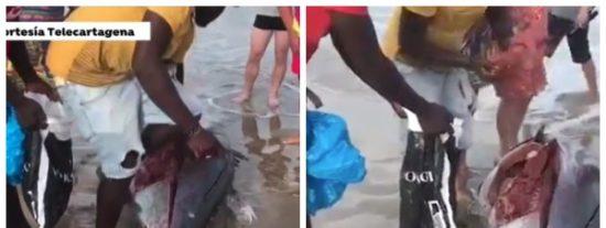 """El 'lapsus' de la reportera que grabó a los que hicieron filetes con los atunes muertos: """"Eran negr..., ehh, extranjeros con necesidades"""""""