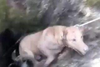 Vídeo Viral: El impresionante rescate de los bomberos a dos perros atrapados en un pozo