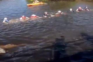 La solidaridad se manifiesta en una cadena humana para rescatar a cuatro delfines a punto de perecer en un canal