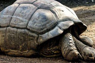 Un zoológico chino pega una canasta sobre una tortuga para que le lancen 'monedas de la suerte'