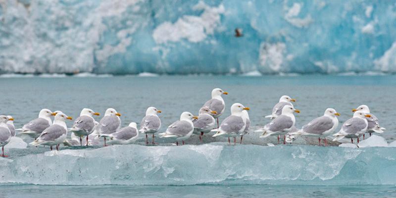 ¿Sabías que el calentamiento global impide a las plantas y animales del Ártico reproducirse con normalidad?