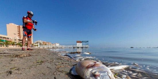 Las terribles imágenes de la catástrofe ambiental en el mar Menor
