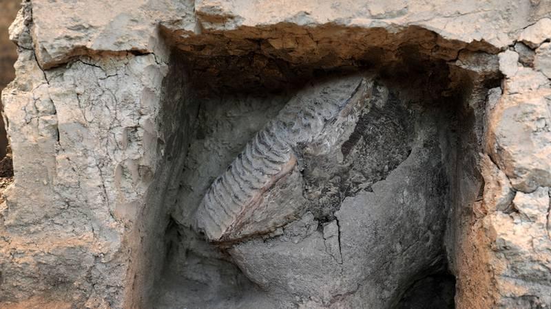 Los terremotos en California dejan al descubierto un fósil de un gran animal de hace 15 millones de años