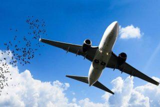 Piloto graba desde la cabina el impacto de un pájaro contra el parabrisas del avión