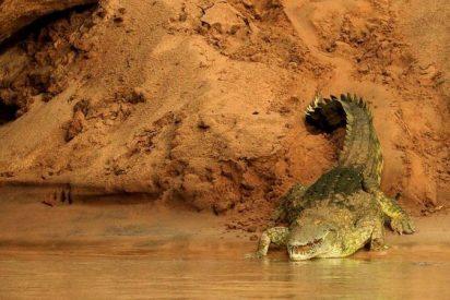 Niña de 11 años salta sobre un cocodrilo y le arranca los ojos para salvar a su amiga del ataque del reptil