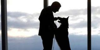 Así es 'Sasha Dog': el nuevo y viral 'engañoso' filtro de Instagram que hace creer que un perro entró en casa