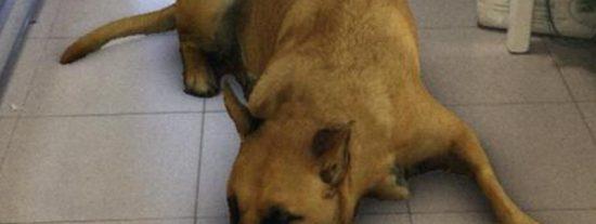 Así es 'Sasha dog', el nuevo efecto de Instagram que se está volviendo viral gracias a las reacciones de las madres