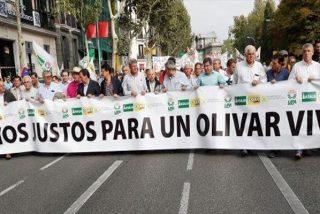 """Así es el grito del sector olivarero ante los bajos precios y la amenaza de aranceles: """"No nos rendimos"""""""