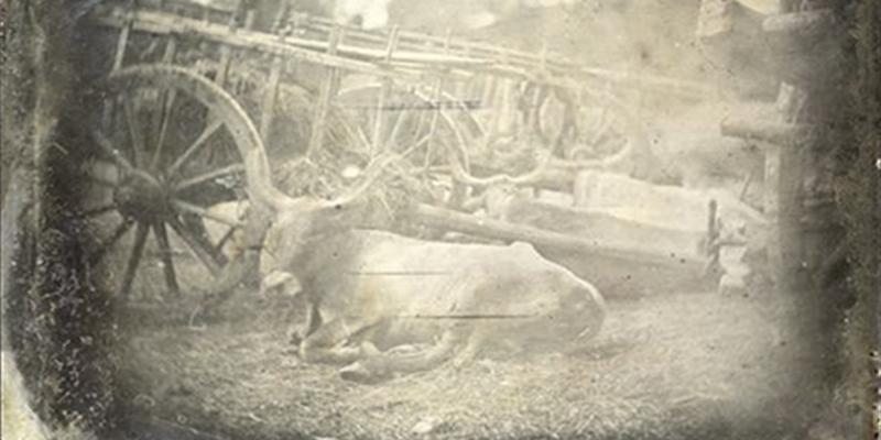 Así es la que se considera la fotografía más antigua tomada a un animal
