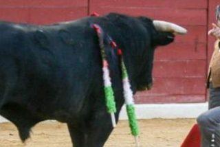 Así fue el debut del hijo de Adolfo Suárez Illana como torero compartiendo cartel con Enrique Ponce