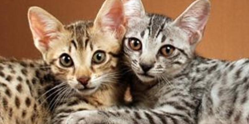 ¿Sabías que llevamos toda la vida entendiendo mal las expresiones de los gatos?