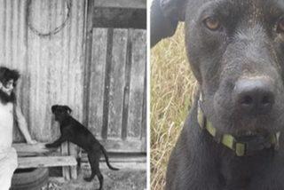 Australia se vuelca para ayudar a salvar a este perrito perdido tras la muerte de su dueño