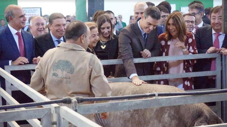 "Manuel del Rosal: ""Cerdos en la feria de Zafra"""