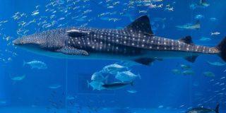 Criaturas carroñeras se dan un festín con esta ballena muerta