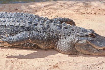 Detienen en Florida a un hombre por tratar de emborrachar a un caimán