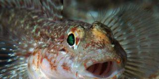 La pelea 'a escupitajos' de este par de peces tiene fascinados a los troles de internet