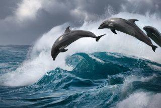 Vídeo Viral: el ataque en masa de los delfines